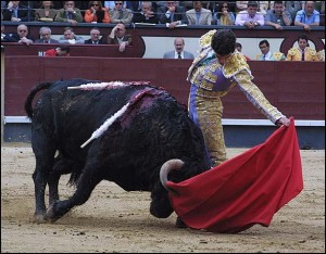 Bullfighting 300x234 Learn About Bullfighting in Spain