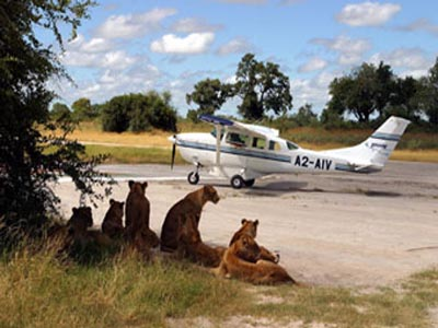 flying safari in africa Experience Various African Safari in your African Vacation