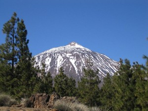 Teide forests 300x225 Ten Great Things to do in Tenerife
