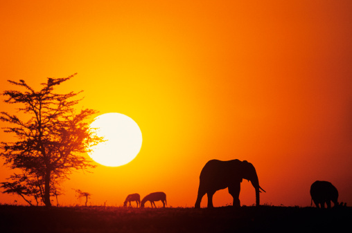Africa Why Take Your Loved One On A Honeymoon To Africa?